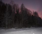 Halvor Roxrud - Elgskogen