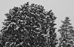 Halvor Roxrud - Snøfiller