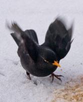 Halvor Roxrud - Klar for take off