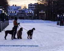 Nils Johan Føyn - Mannen og hundene