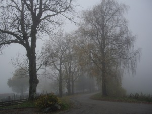 Benny Berget 2-Trær i tåke