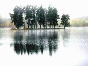 Benny Berget-Trær i tåke