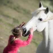 Tore Johan Birkeland - Lykken er hest
