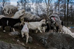 Trygve Nyland Jensen - Vi kravler og klatrer