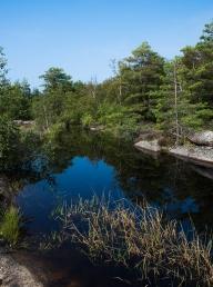 Halvor Roxrud - Ved dammen