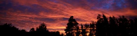 Arnt Lerheim - Trær i solnedgang