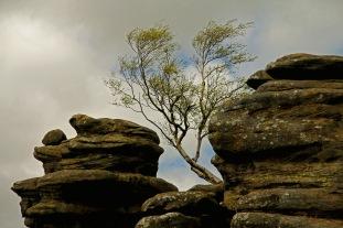 Benny Berget - Brimham Rocks