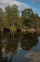 Halvor Roxrud - Trær opp og ned