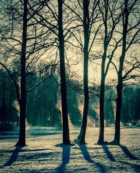 Håvard Rye - Fem trær på golfbanen