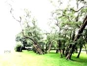 Inger-J.Marheim-I parken