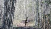 Inger-J.Marheim-Møte i skogen