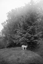 WencheEngebrethsen-Beskyttet_av_trær