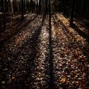 Bjørn Aaslie - Høstens lange skygger