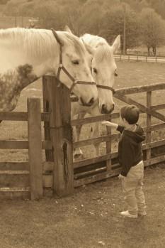 Benny Berget-Gutten og hestene