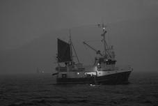 Dagfinn Nilsen Sildefiske