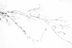 Vinterlig grafikk - Inger-J.Marheim