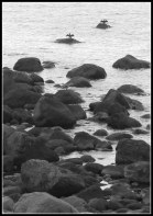 Kari Skodvin - En skarve tørk