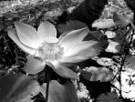 Solveig Olsberg-Lotus