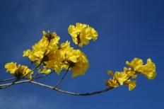 Benny Berget - Gule blomster