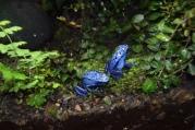 Kjell Espeland - De små blå froskene