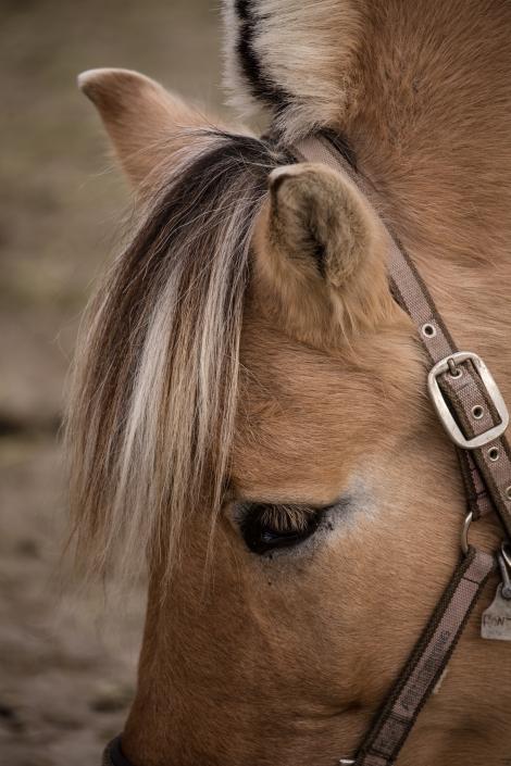 Torstein Gleditsch - Horse