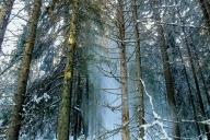 Gro Korsmoe - Vintermagi
