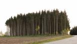 Lennart Carlsson - 100 m skogen