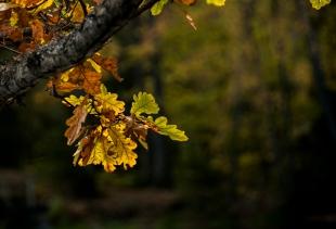 Tommy Edvardsen - Høstblader