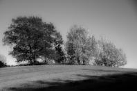 Tommy Edvardsen - Høstfarger i sort - hvitt