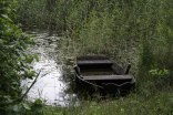 Irene Kalvoey - Hva man kan finne i skogen