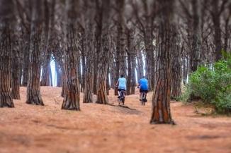 Gro Korsmoe - På tur I pinjeskogen