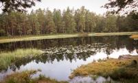 Lennart Carlsson - Tjern i skogen