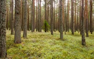 Lennart Carlsson - Tyttebærskogen