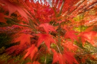 Hvordan høsten kommer