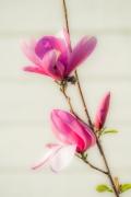 Vårens myke toner