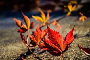 Eirin Dahl - Høstens farger