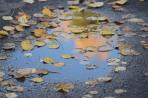 Kjell Espeland - Et glimt av høst