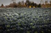 Lennart Carlsson - Tid for innhøsting
